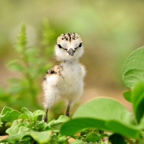 a new life #birds