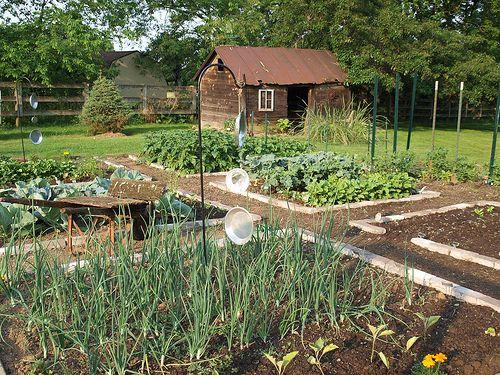 Quaint little garden!