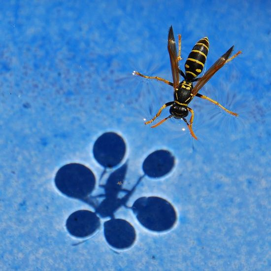 Beautiful example of surface tension.