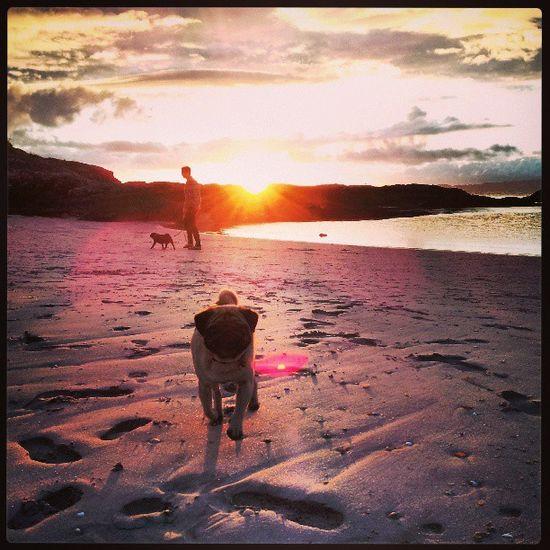 Beautiful sunset, beautiful beach, beautiful pugs