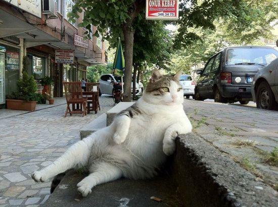 Cat. Chillin'.