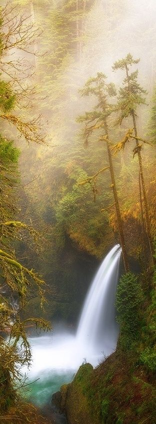 Metlako Falls, Eagle Creek, Columbia River Gorge, Oregon, USA