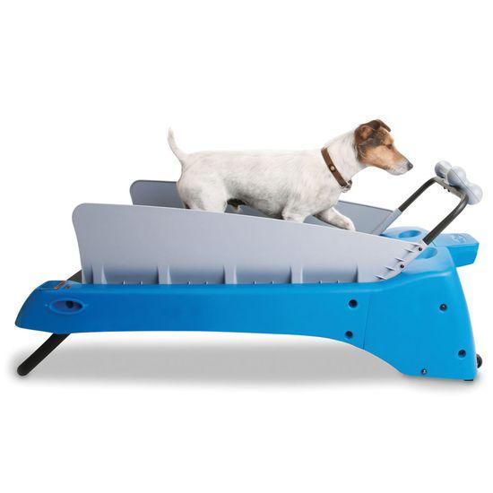 The Canine Treadmill - Hammacher Schlemmer