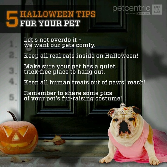 Halloween tips for pet safety