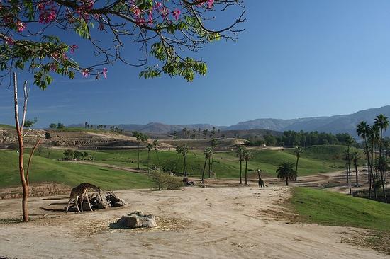 San Diego Wild Animal Park, California by Paul & Kelly, via Flickr