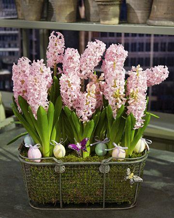 Spring Bulb Arrangement