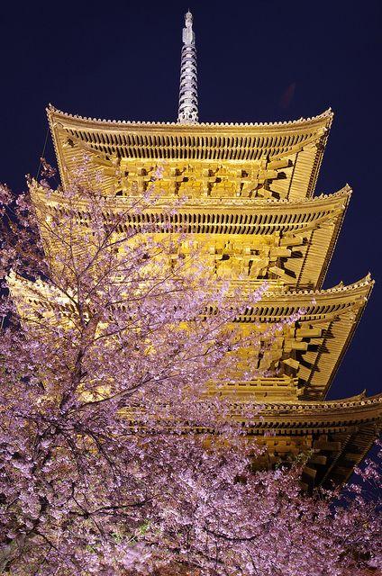 Illuminated five-story pagoda of Toji and cherry blossom trees, Japan
