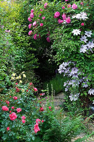 Beautiful Clematis and roses, with other pretty plants makes this a stunning garden scene....love this~~