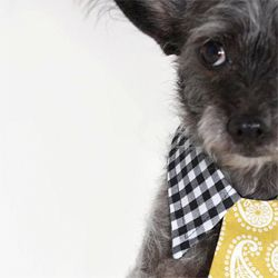 Jalina Colon of Augusta, Georgia handcrafts ties for the stylish pup...