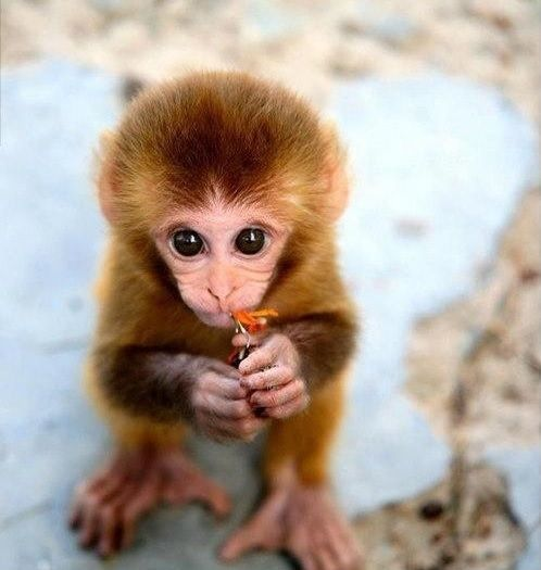Cute and Cuddly Baby Animals