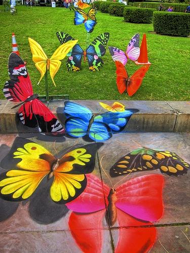 Josh Maxwell butterflies 3D chalk pavement art, also with butterflies mounted on panels.