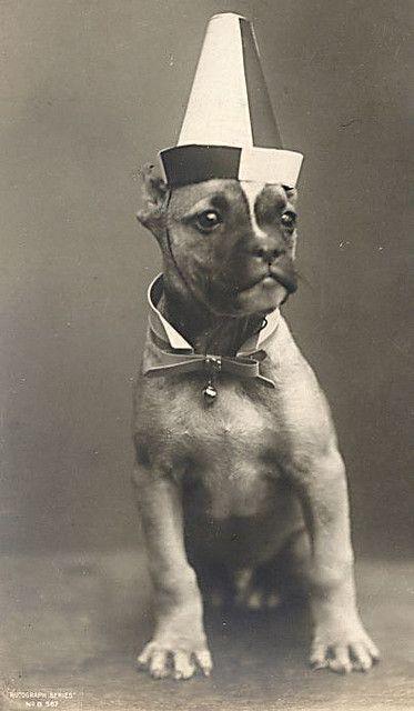 #dog #hat