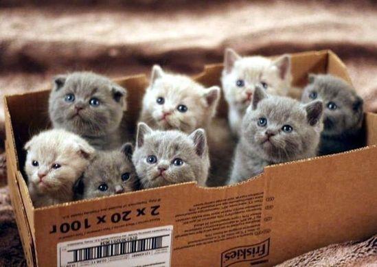 a box full of kittens!!