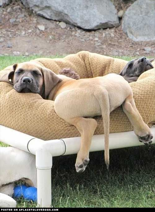 Lazy bum