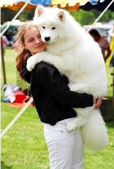 Cute animals. - Cute animals world