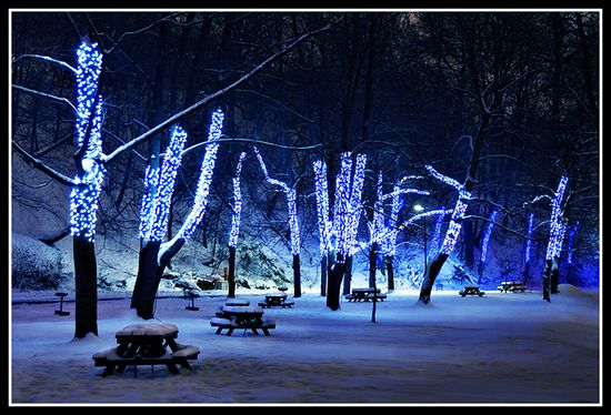 blue-led-christmas-lights-trees