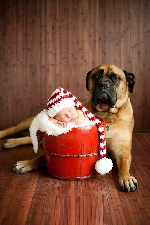 Christmas baby and dog.... I wish I knew my dogs would be still. Or not lick a baby to death