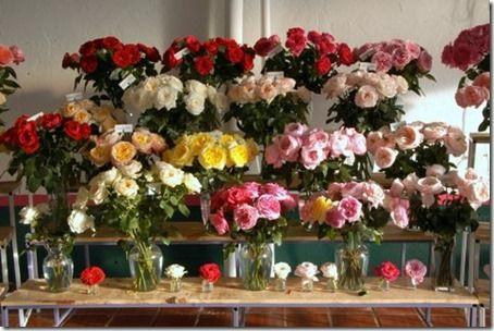 Alexandra Farms Garden Roses
