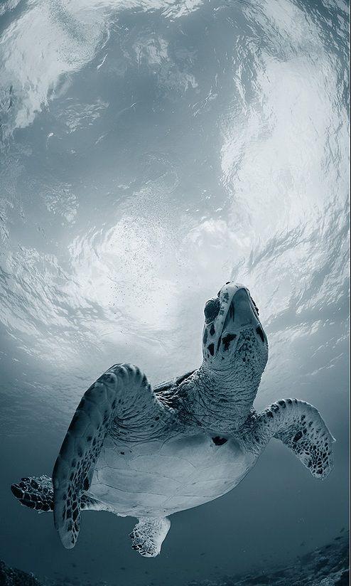 Sea turtle. S) #best #meditative #ocean #animals #interesting #beautiful #things