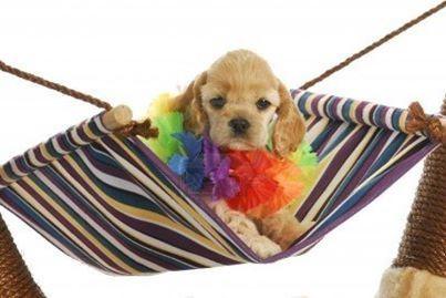 aloha baby dog