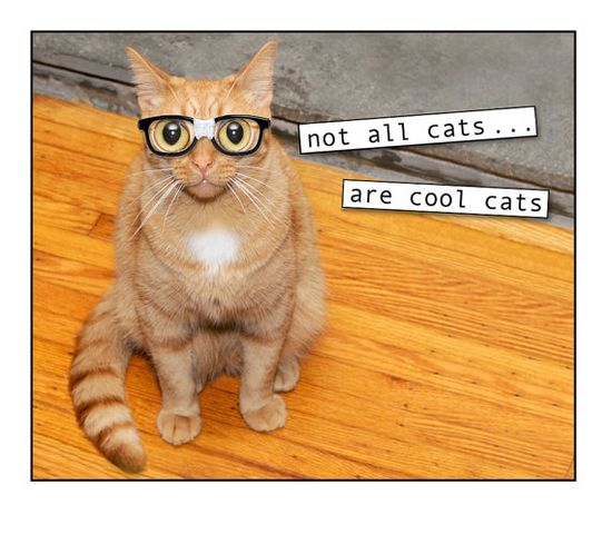 Cats photo collage mixed media collage Nerd Funny by RikkiVanCamp, $15.00