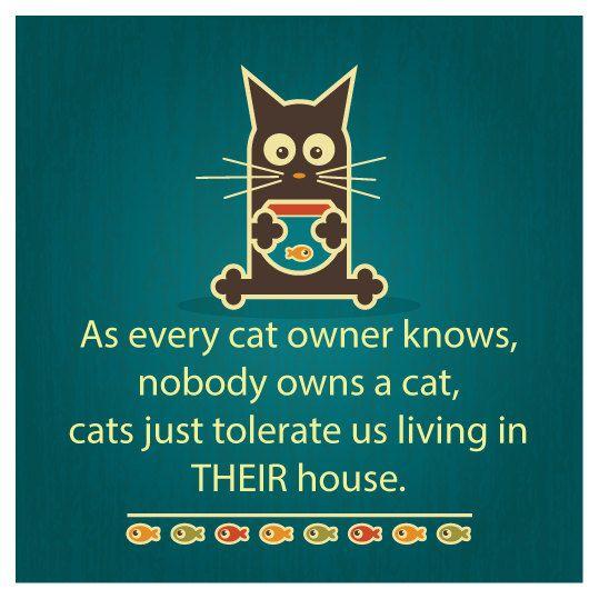 Quite true!  #cats #humor