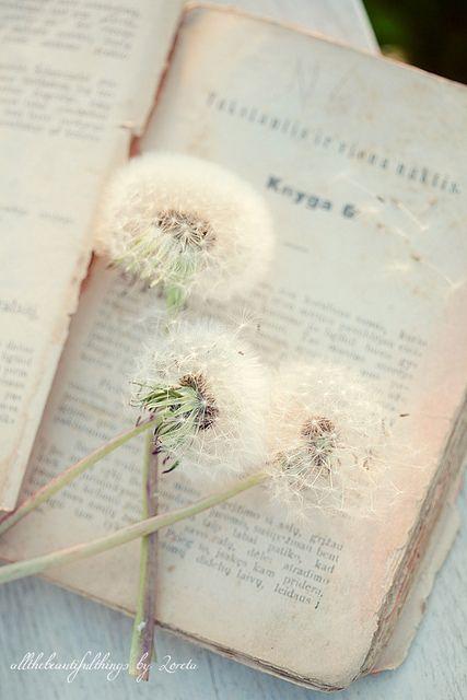 vintage book and dandelion