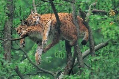 wild-animal-photographs