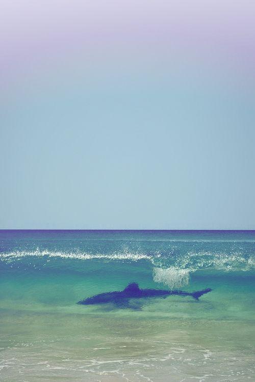 SHARK!!!!!!!