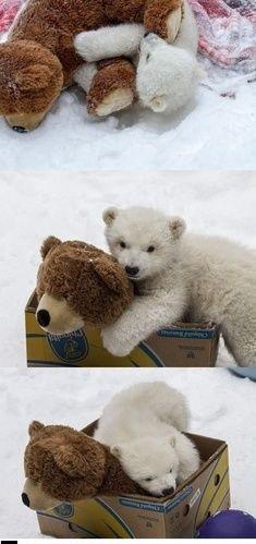 Cute Pet Polar Bear
