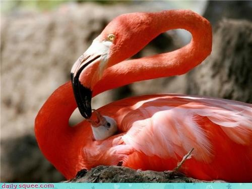 cute baby animals - Hungry Baby Flamingo