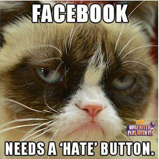 #grumpy #cats #kittens #grumpycat #funny