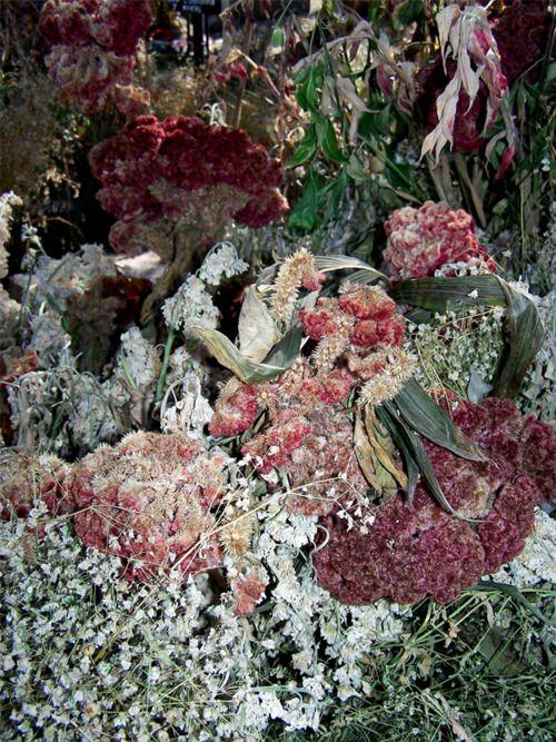 dried flower art