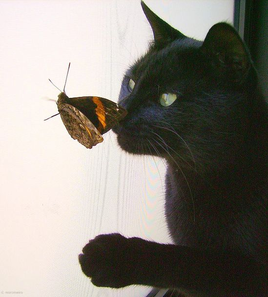 Black Cat & Butterfly.