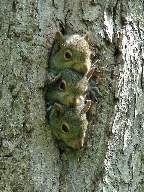 3 Baby Squirrels
