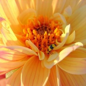 Search For: Macro flower - Pixdaus