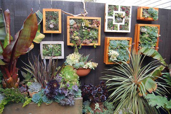 Succulent's
