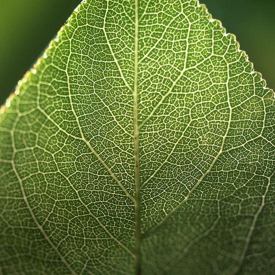 green, #green, #green #leaf
