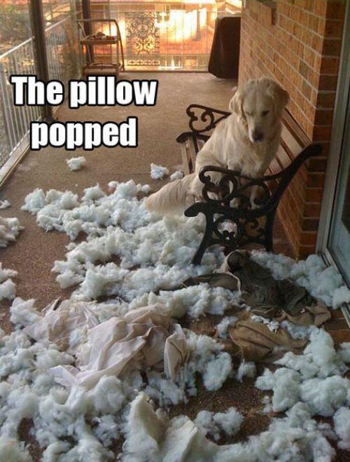 Something my dog would do....