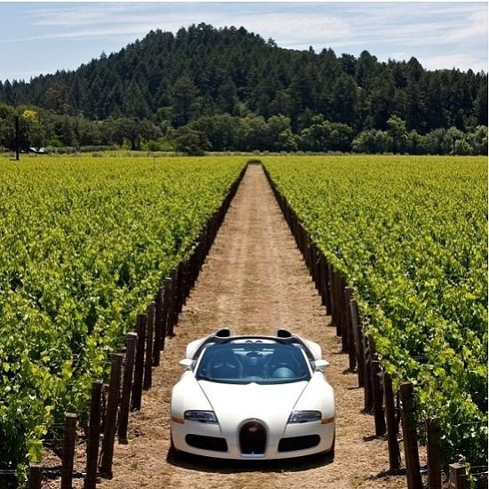 Bugatti Veyron. Vineyard. Classy.