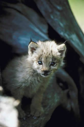 OMG Baby Animals