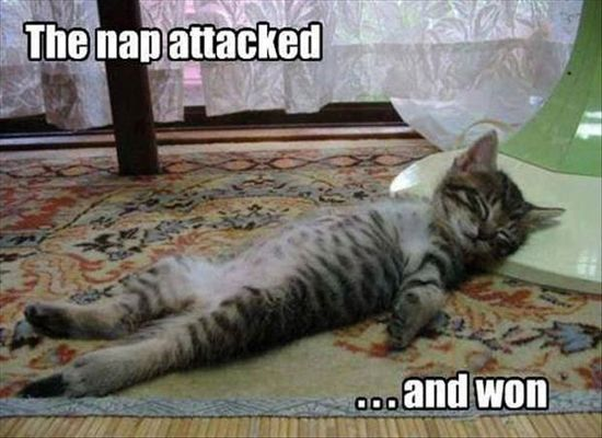 """The nap attacked... and won."""