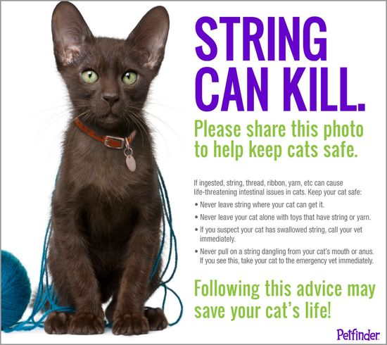 Please help us share this important reminder to cat parents! Then check out these safer ways to keep your cat entertained.