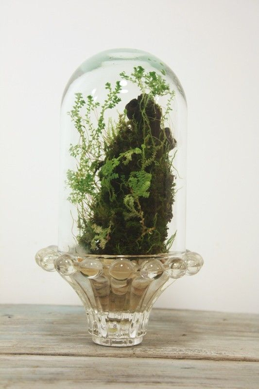 rainforest terrarium by SlugandSquirrel #etsy