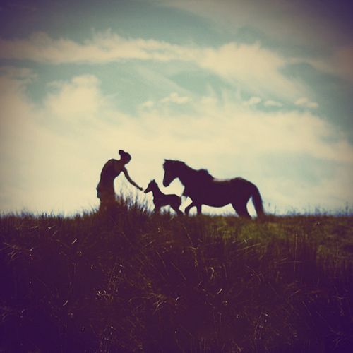 Running the pasture ? One of the best experiences in the world, the moment a foal takes its first steps towards you(: