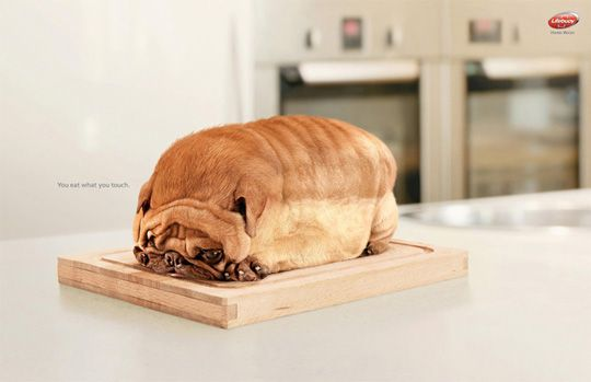 8-Dog-Toast - Funny Ads