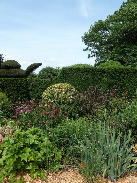 Cut Bird Peeping Flower Border @ Bingerden