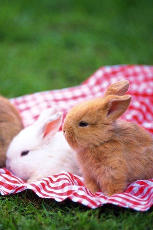 Peter Rabbit & Friends