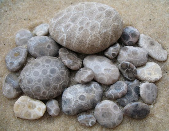 Petoskey stones ~ fossilized coral that lived 350 million years ago - the rocks rounded in the surf along the shore of Lake Michigan near Petosky, Michigan