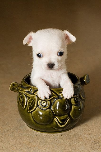 10 best small dogs for families